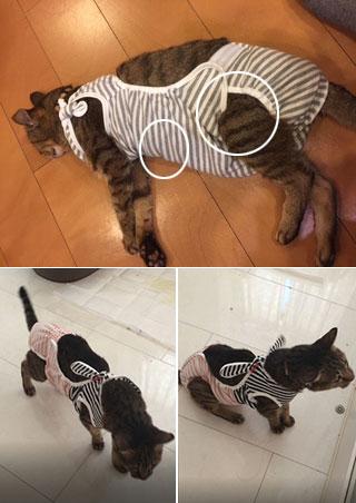 猫スタンダードサイズ おむつカバー
