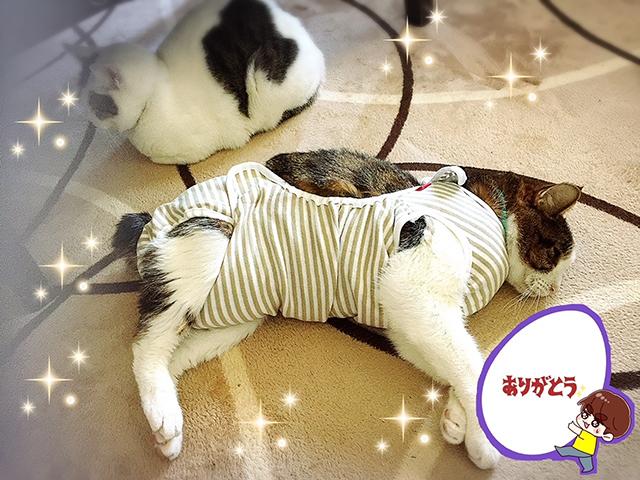 猫用 おむつカバー