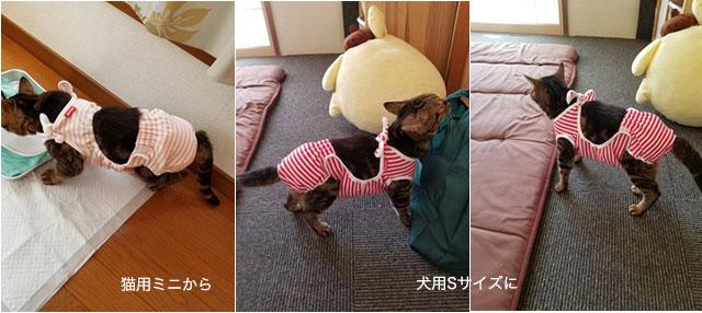 猫用から犬用へ変更 おむつカバー