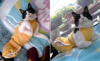 猫用オムツカバー