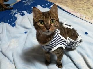 成長してサイズが変わる子猫ちゃんのおむつカバー