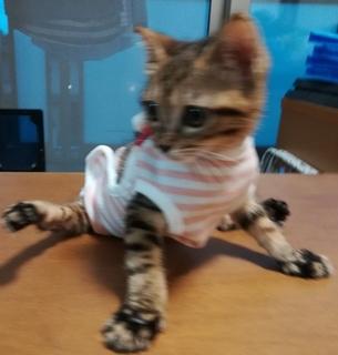 子猫 超ミニサイズ おむつカバー