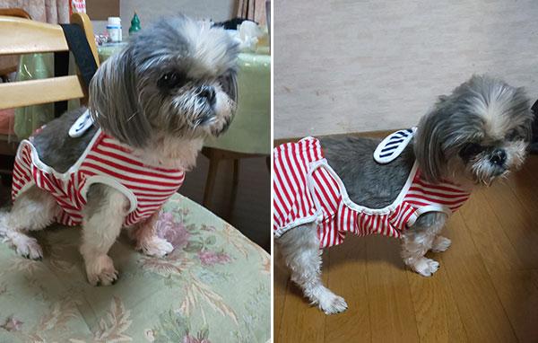 シーズ おむつカバー 保護犬